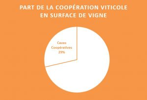part-cooperatives-surface